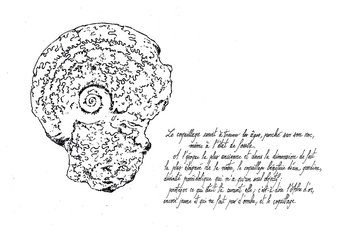 Première île - fossile