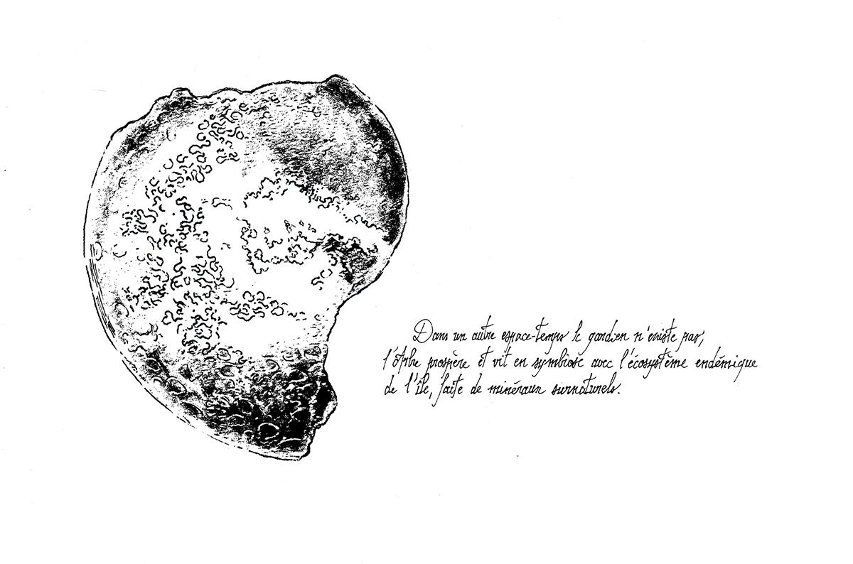 Deuxième île - fossile
