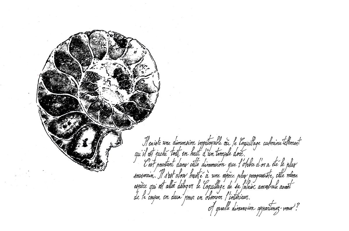 Quatrième île - fossile
